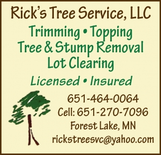 Tree & Stump Removal Lot Clearing