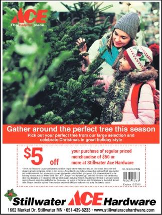 Gather Around the Perfect Tree this Season