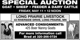 Special Auction