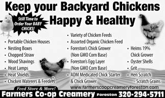 Keep Your Backyard Chickens Happy & Healthy