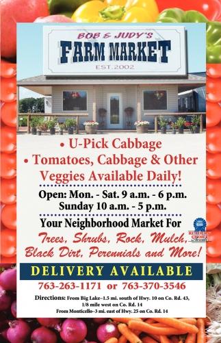 U-Pick Cabbage