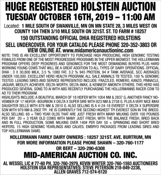 Huge Registered Holstein Auction