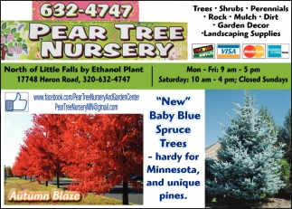 New Baby Blue Spruce Trees