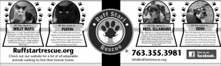 Check out Our Website for a List of All Adoptable Animals Waiting to Find their Forever Home