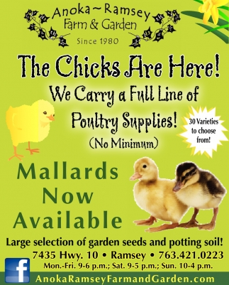 The Chicks are Here!